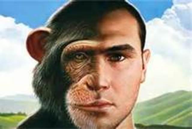 Humans & Apes