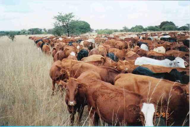 Overgrazing Animals
