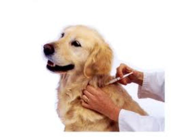Vacuna contra la ràbia