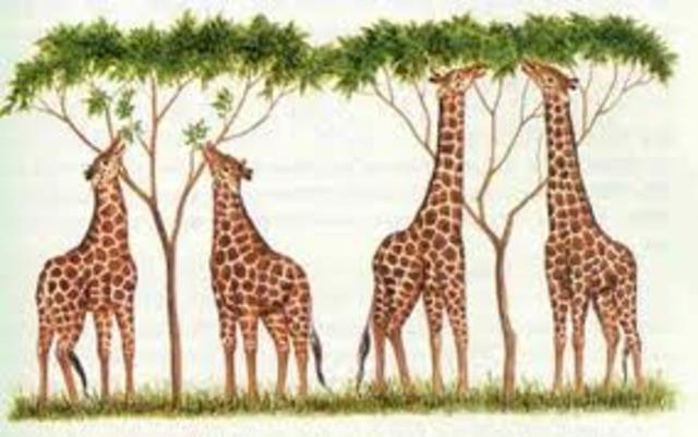 Teoría de la selección natural-Darwin