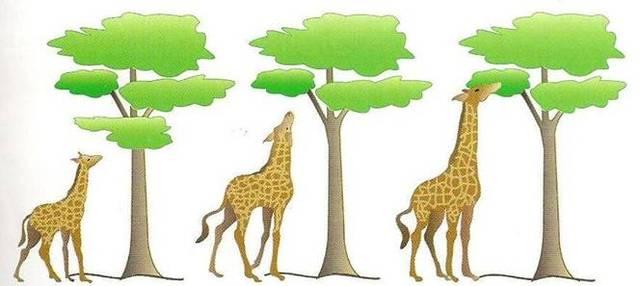 Formuló la teoría de la evolución -Lamarck