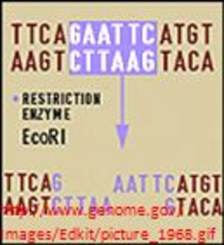 First Restriction Enzymes Described