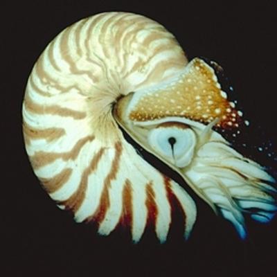 The Mollusk timeline