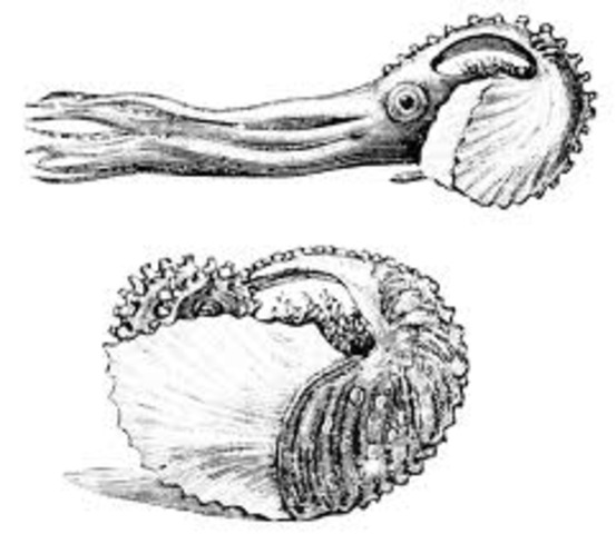 The Argonauts\Paper Nautilus