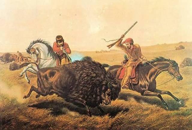 Domestication of the buffalo