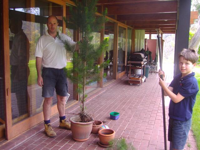 FIRST LIVE HOME GROWN CHRISTMAS TREE