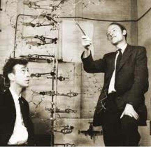 James D. Watson y Francis H.C.
