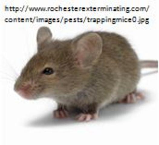 First Transgenic Animals