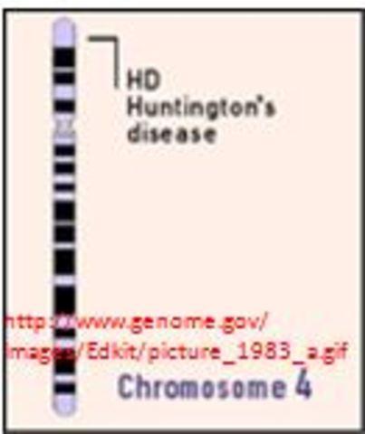 First Genetic Disease Mapped