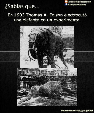 La electrocucion del elefante tospi