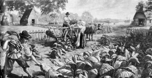 Tobacco was introduced in Jamestown