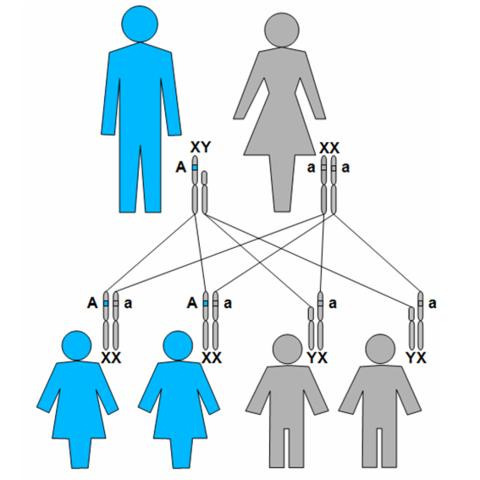 investigación Genética, plasticidad cerebral y evolución de la mujer