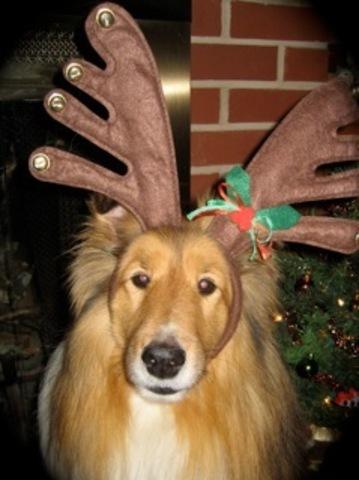 Third dog, Caesar, passed away.