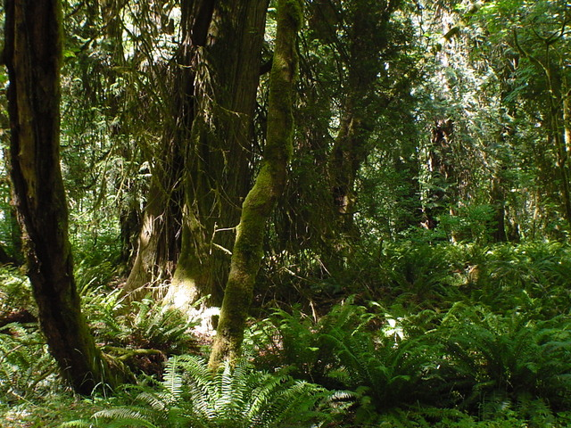Book:1 Chapter: 6 Frodo, Sam, Pippin, and Mary set out into the Old Forest