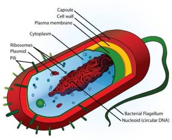 First Prokaryotic Cells Idendified