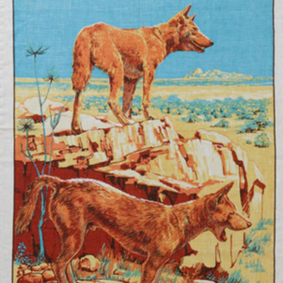 A Dingo Stole My Baby timeline
