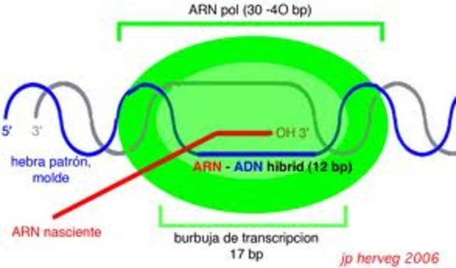 Descubrimiento ARN