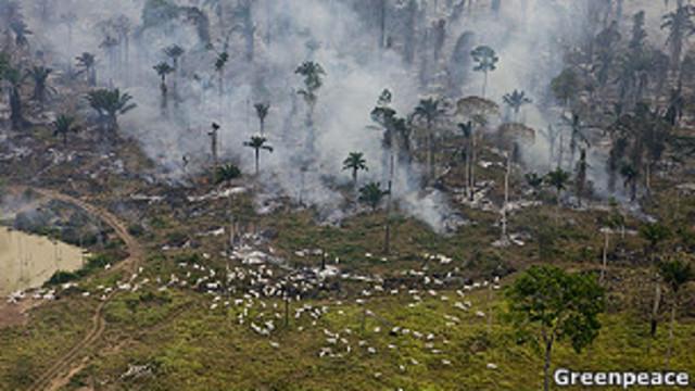 Brasil: supermercados no venderán carne de ganado criado en la selva amazónica
