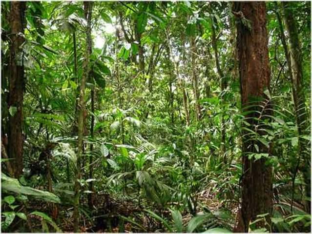 Desaparición de Selvas Tropicales