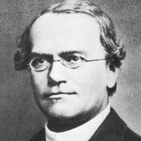 Gregor Mendel is Born