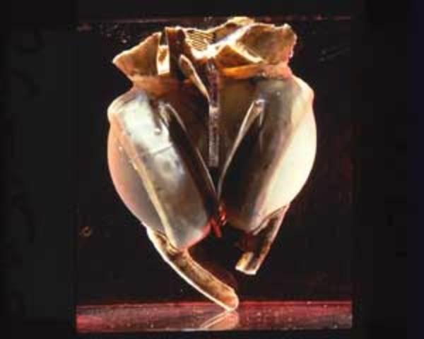 Liotta-Cooley artificial heart