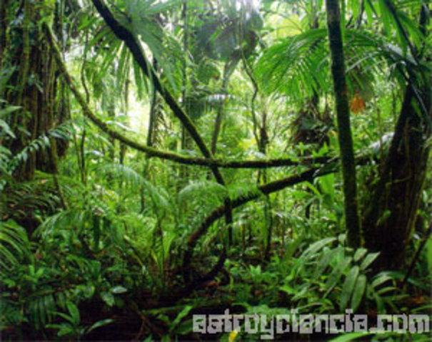 Desaparicion De Las Selvas Tropicales