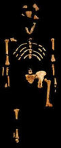 Alopithecus africanus