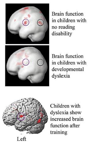 Neuroscientific Contributions