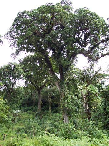 Costa Rica!-- El veinte de junio, dos mil nueve