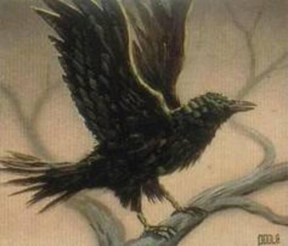 Roac the raven