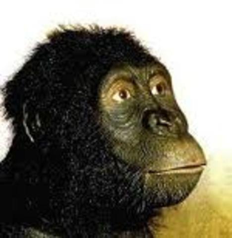 Australopithecus anamensis (homínido)