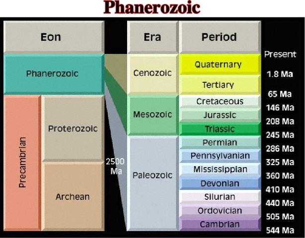 Phanerozoic Eon 570 MYA - Present day