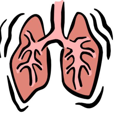 Fetal Respiratory Development timeline