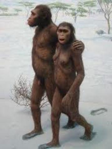 Australopithecus afarensis (homínido)