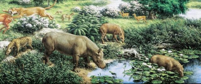 Oligocene 38 MYA - 26 MYA