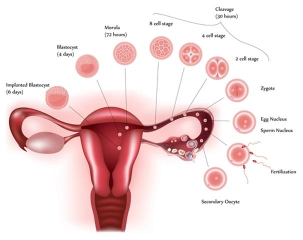 Implantation Happens