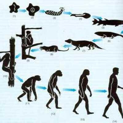 Evolución de las especies timeline