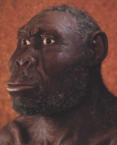 Homo rudalfensis