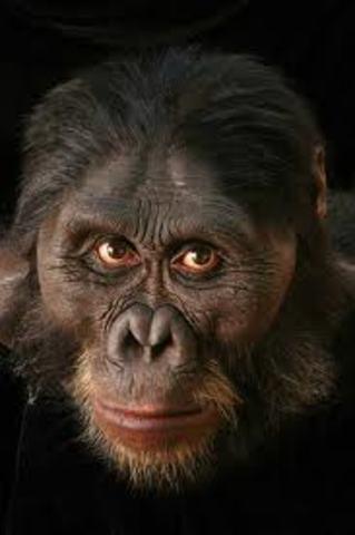 Austrolopithecus afarensis (homínido)