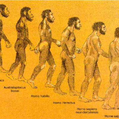 Homínidos.Evolución  timeline