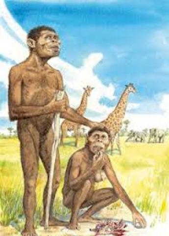 Austrolipithecus africanus (homínido)