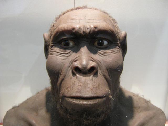 Homo rudolfensis (homido)
