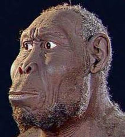 Homo rudolfensis (homínido)