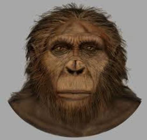Paranthropus Aethipicus