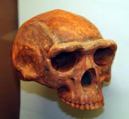 Entre 1.8 millones de años y 300.000 antes del presente