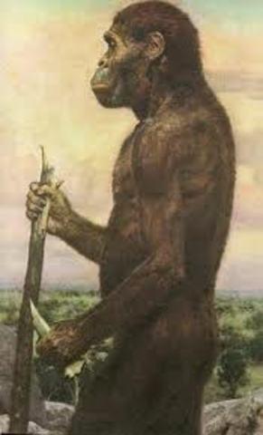 Astrolopithecus anamensis.