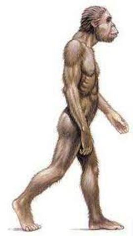 Astrolopithecus africanos.