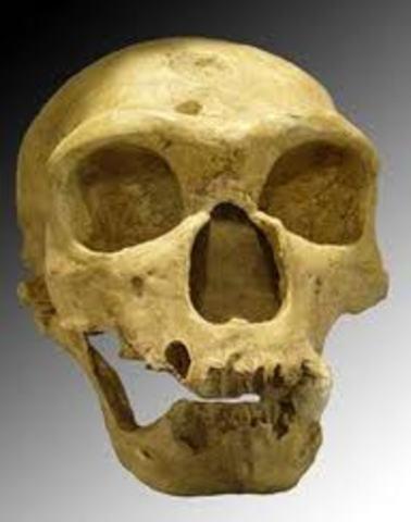 Homo nearderthalensis