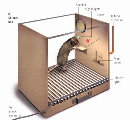 Experimento caja Skinner