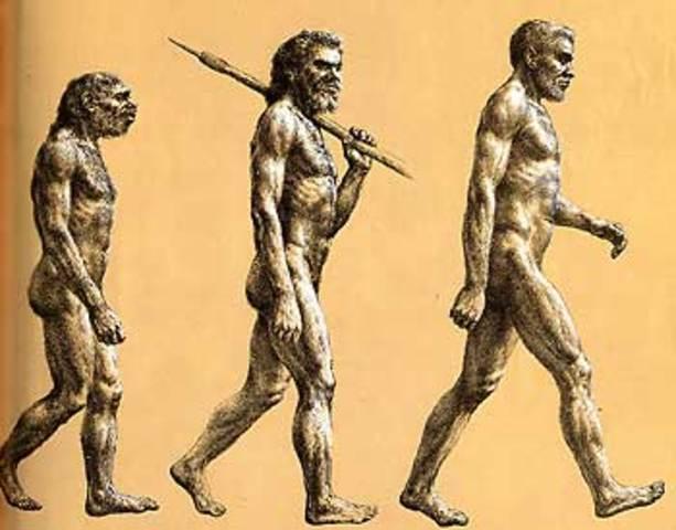 Man Like Ape